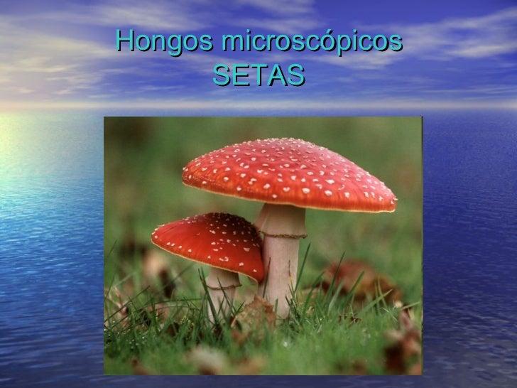 Los microorganismos for Hongos de piscina