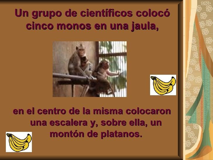 Los monos Slide 2