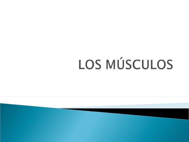    El sistema muscular   Funciones   Componentes