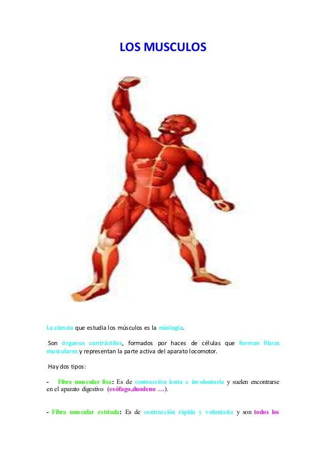 ANATOMÍA RADIOLÓGICA: Los Músculos 4ª PARTE