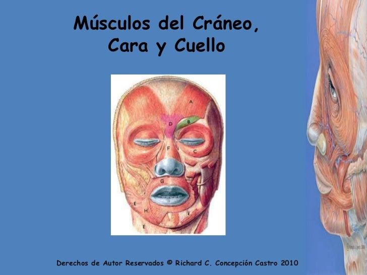 Músculos del Cráneo, Cara y Cuello<br />