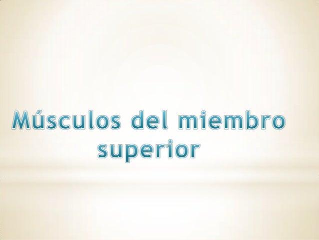 Músculos del hombro Grupo muscular anterior Plano profundo Musculo subclavio Musculo pectoral menor Plano superficial Musc...