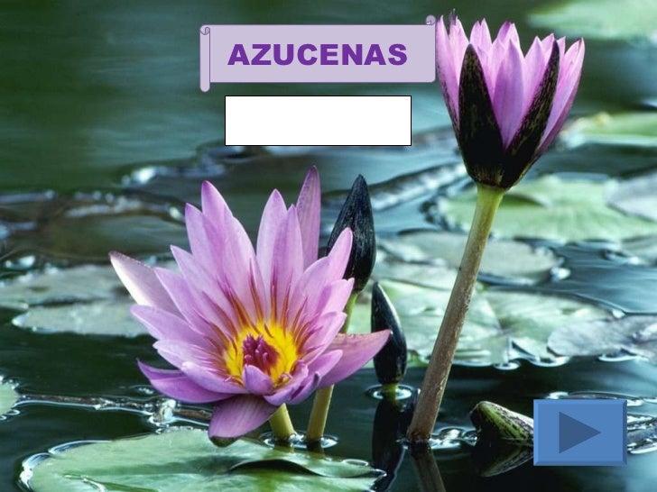 Los nombres de las flores for Plantas decorativas con sus nombres