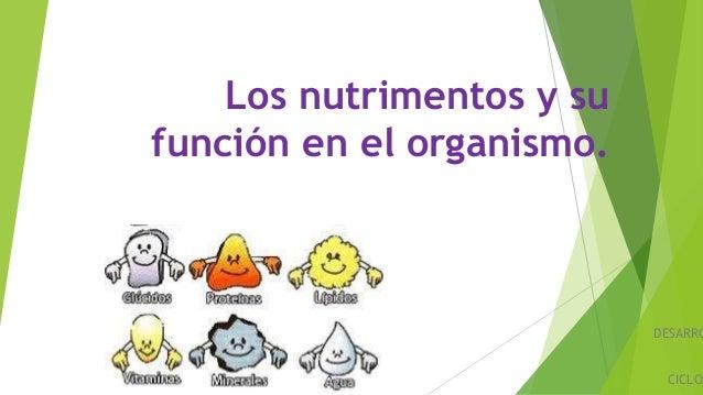 Los nutrimentos y su función en el organismo. DESARRO CICLO