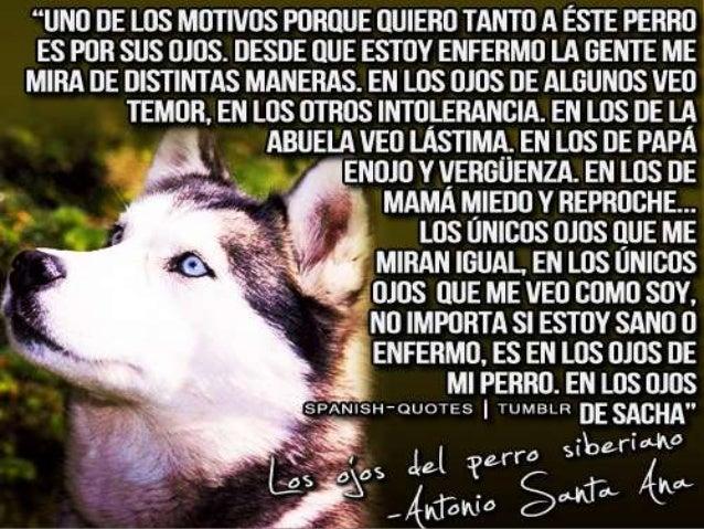 Los Ojos Del Perro Siberiano Antonio Santa Ana