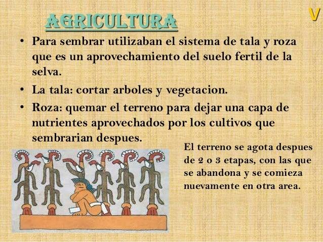 Los olmecas for Que es la asociacion de cultivos