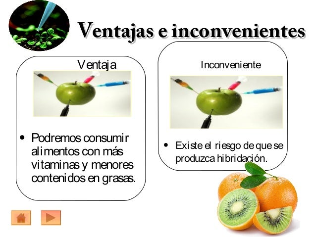 Los organismos transgenicos - Ventajas alimentos transgenicos ...