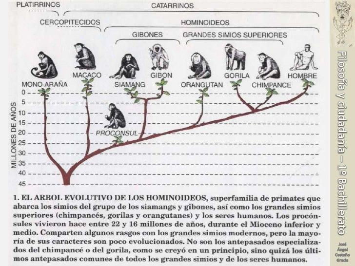 Los orígenes de la humanidad Slide 3