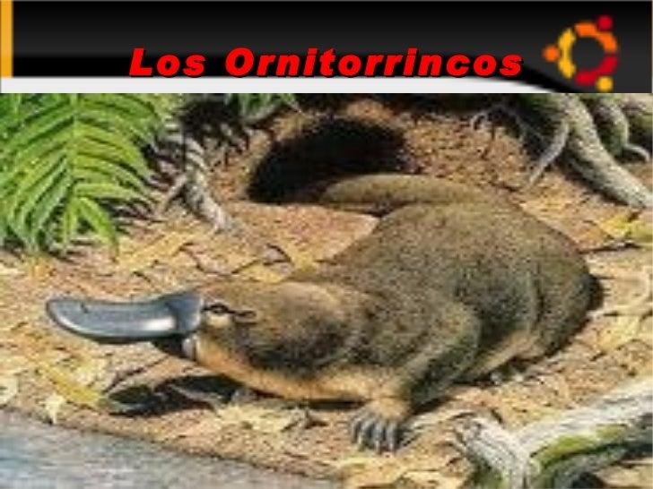 Los Ornitorrincos