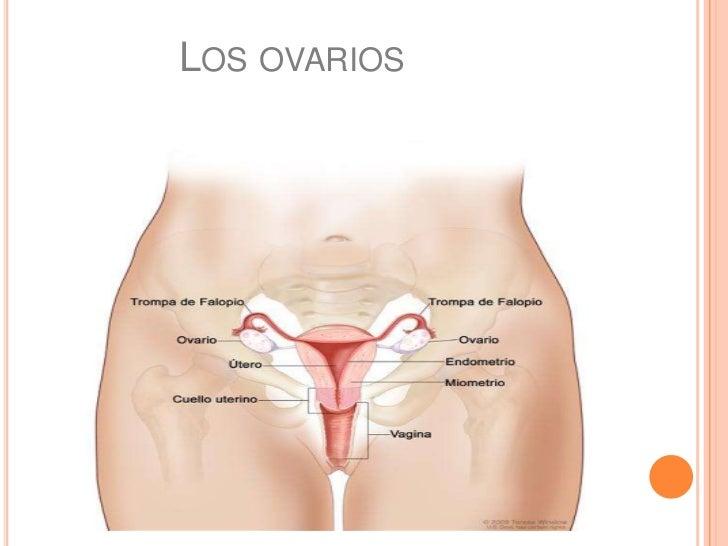 puta cortandose los ovarios