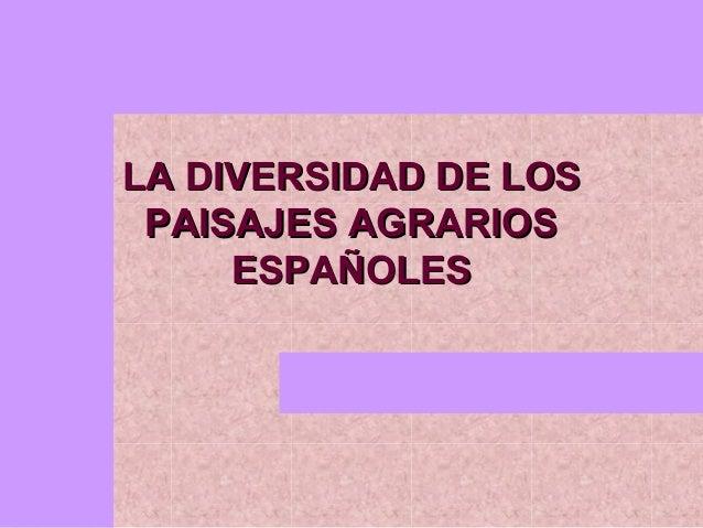 LA DIVERSIDAD DE LOS PAISAJES AGRARIOS     ESPAÑOLES
