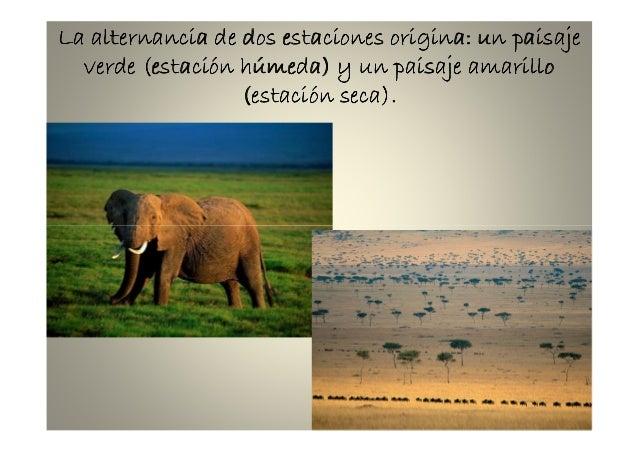 También puede haber desiertos rocosos oTambién puede haber desiertos rocosos oTambién puede haber desiertos rocosos oTambi...