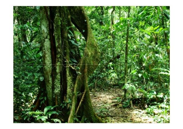 La vegetación se escalona en alturas: losLa vegetación se escalona en alturas: losLa vegetación se escalona en alturas: lo...