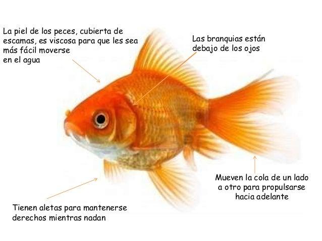 Los peces 2 de primaria for Fuentes de agua con peces