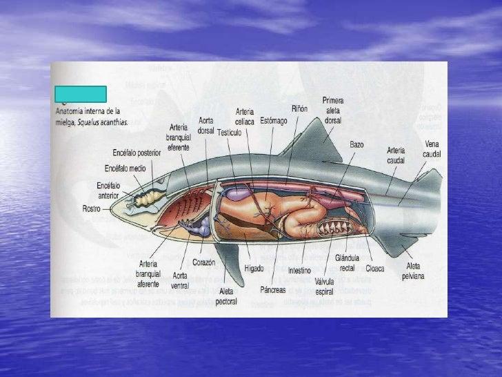 Los peces zoologia exposicion