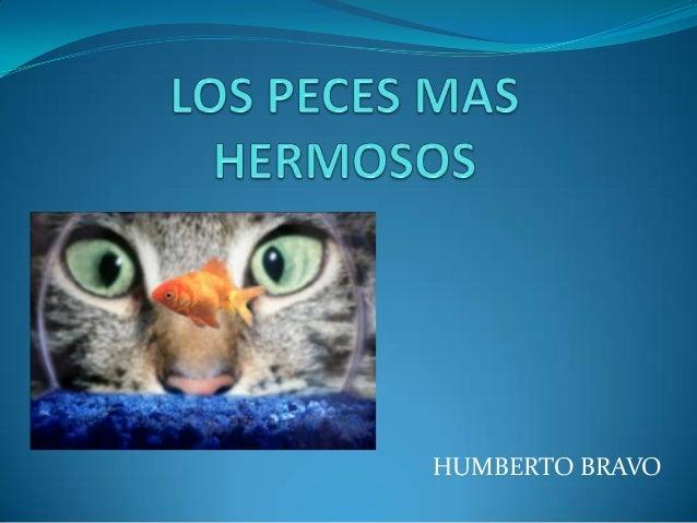 Los peces mas hermosos - Los peces mas bonitos del mundo ...