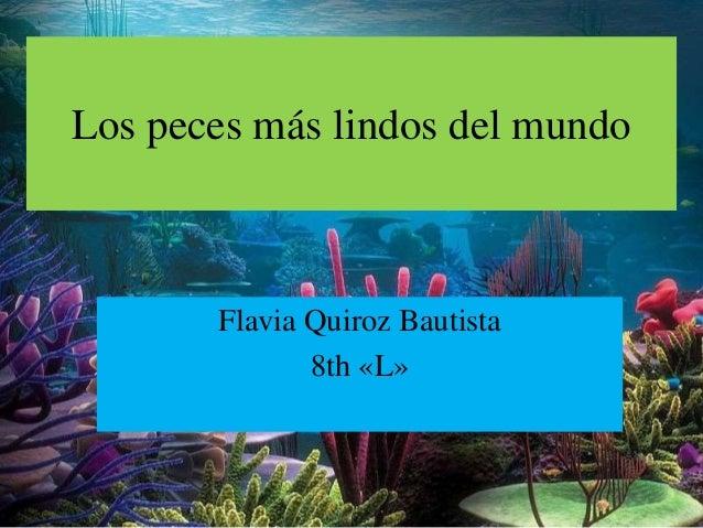 Los peces m s lindos del mundo - Los peces mas bonitos del mundo ...