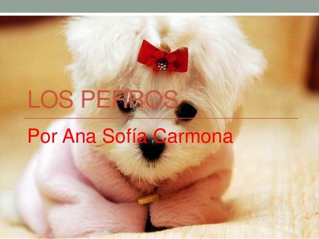 LOS PERROSPor Ana Sofía Carmona