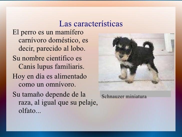 De perrito con amigo - 1 part 2