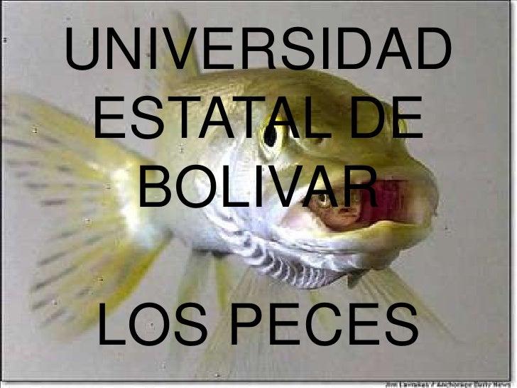 UNIVERSIDAD ESTATAL DE BOLIVARLOS PECES<br />
