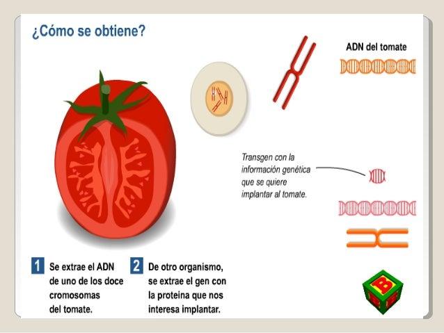 Belisario carlos los productos transg nicos y su for Como obtiene su alimento un arbol