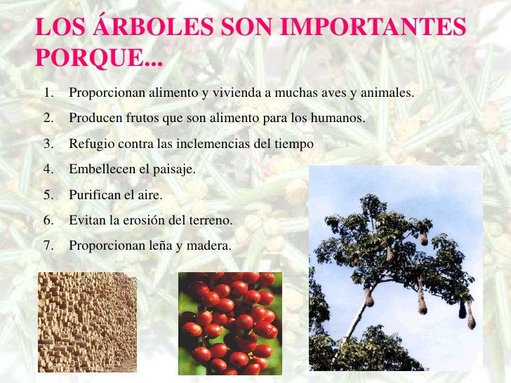 Los rboles for Cuales son los arboles perennes