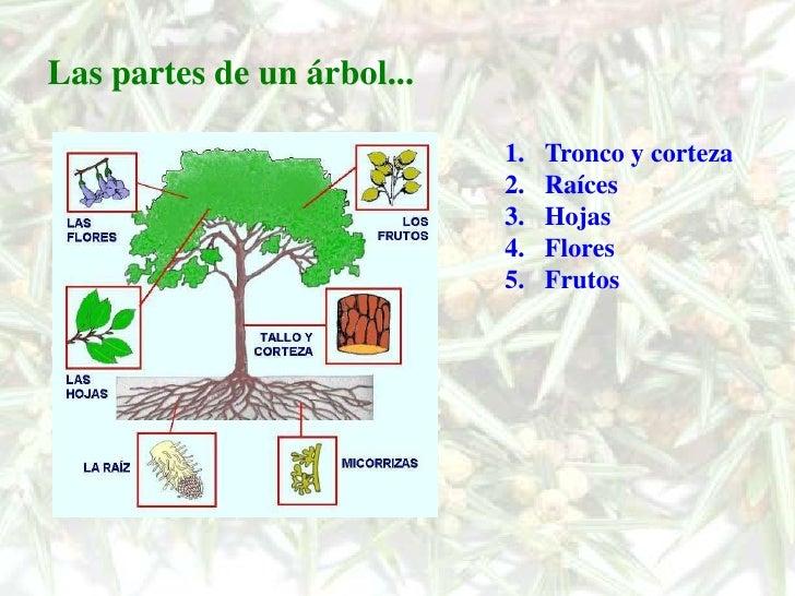 Los rboles for Arbol con raices y frutos