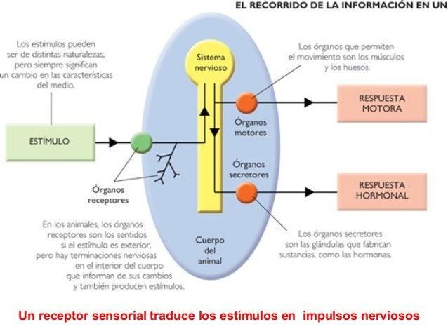 RECEPTORES NERVIOSOS EPUB DOWNLOAD