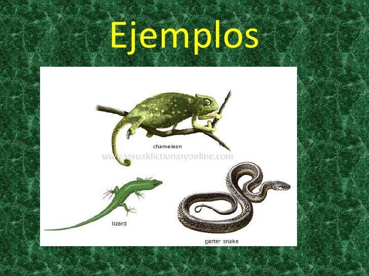 Q Son Los Reptiles Los reptiles