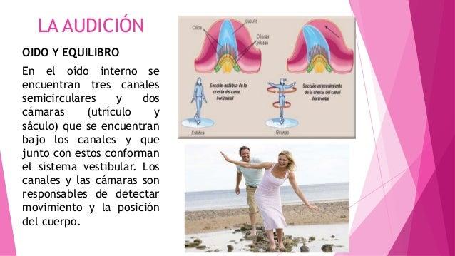 LA AUDICIÓN OIDO Y EQUILIBRO En el oído interno se encuentran tres canales semicirculares y dos cámaras (utrículo y sáculo...