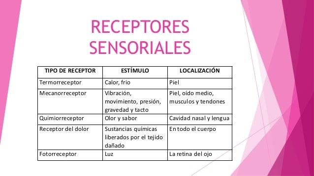 RECEPTORES SENSORIALES TIPO DE RECEPTOR ESTÍMULO LOCALIZACIÓN Termorreceptor Calor, frio Piel Mecanorreceptor Vibración, m...