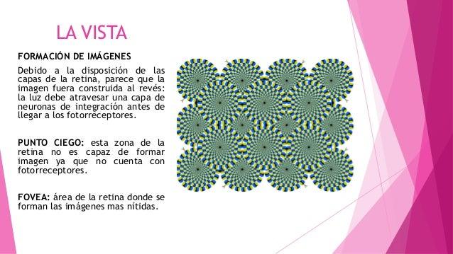 LA VISTA FORMACIÓN DE IMÁGENES Debido a la disposición de las capas de la retina, parece que la imagen fuera construida al...
