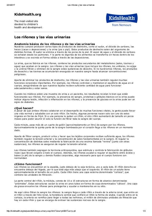 APARATO URINARIO, GENERALIDADES