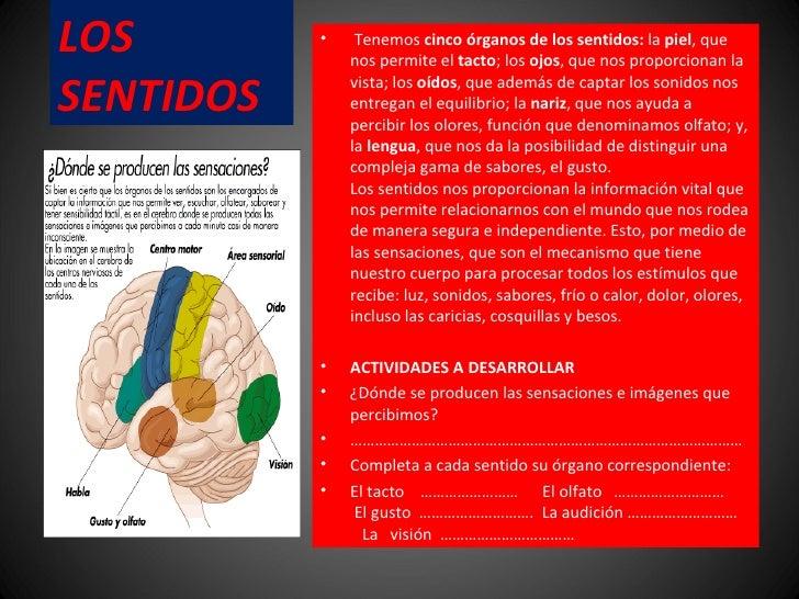 LOS SENTIDOS  <ul><li> Tenemos  cinco órganos de los sentidos:  la  piel , que nos permite el  tacto ; los  ojos , que no...