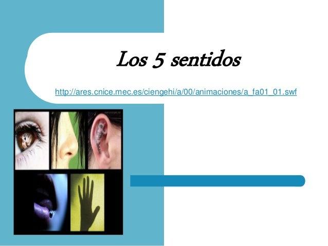 Los 5 sentidos http://ares.cnice.mec.es/ciengehi/a/00/animaciones/a_fa01_01.swf