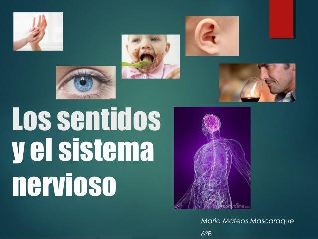 Los sentidos y el sistema nervioso for El divan de los sentidos