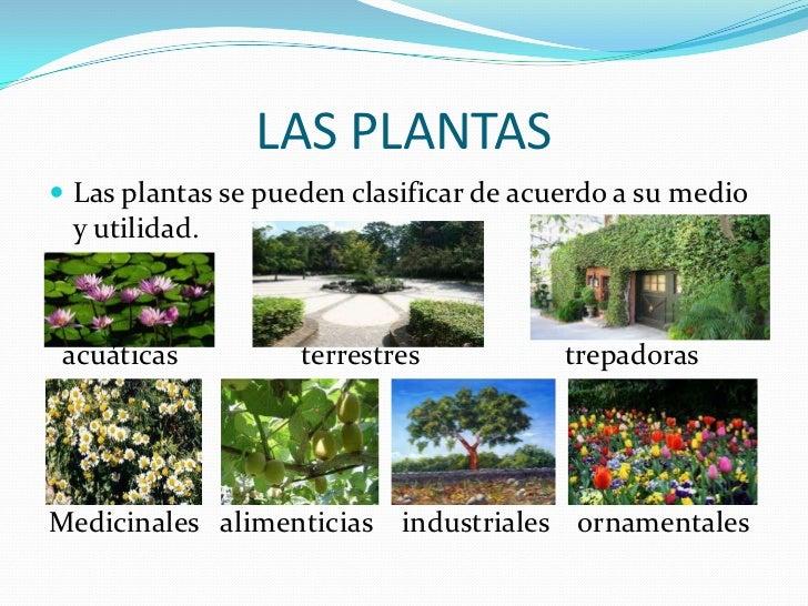 Los seres maravillosos for Clasificacion de las plantas ornamentales