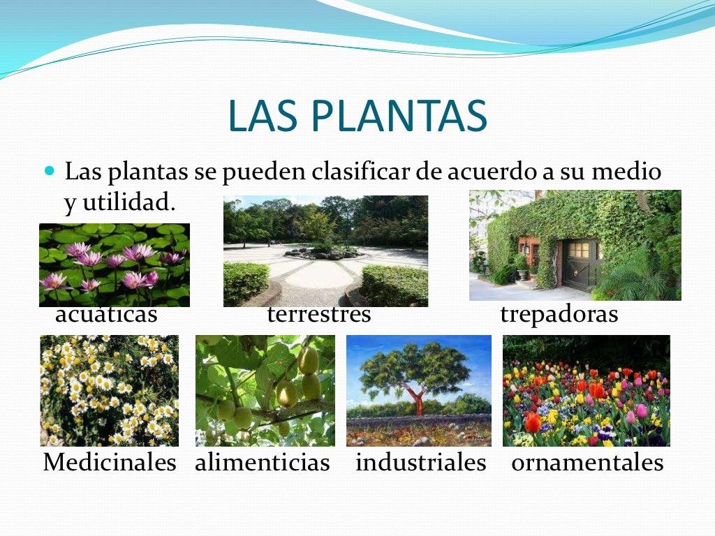 Los seres maravillosos for Plantas ornamentales y medicinales