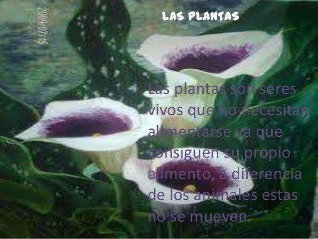 LAS PLANTASLas plantas son seresvivos que no necesitanalimentarse ya queconsiguen su propioalimento, a diferenciade los an...