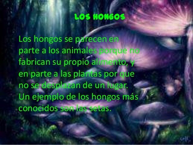 LOS HONGOSLos hongos se parecen enparte a los animales porque nofabrican su propio alimento, yen parte a las plantas por q...