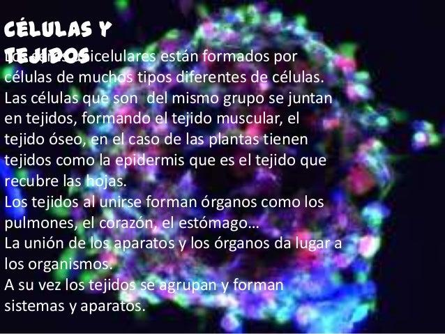 Células ytejidosLos seres unicelulares están formados porcélulas de muchos tipos diferentes de células.Las células que son...