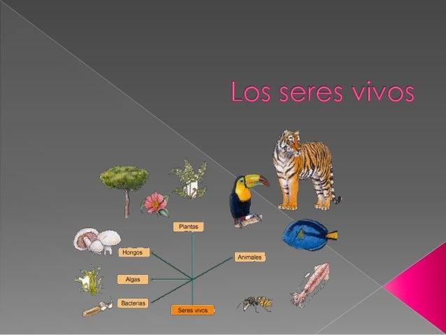  A diferencia de los seres vivos o bióticos, los cuales se caracterizan por nacer, nutrirse, relacionarse, reproducirse y...