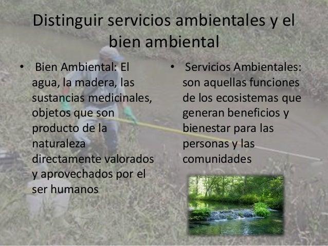 Los servicios ambientales Slide 2