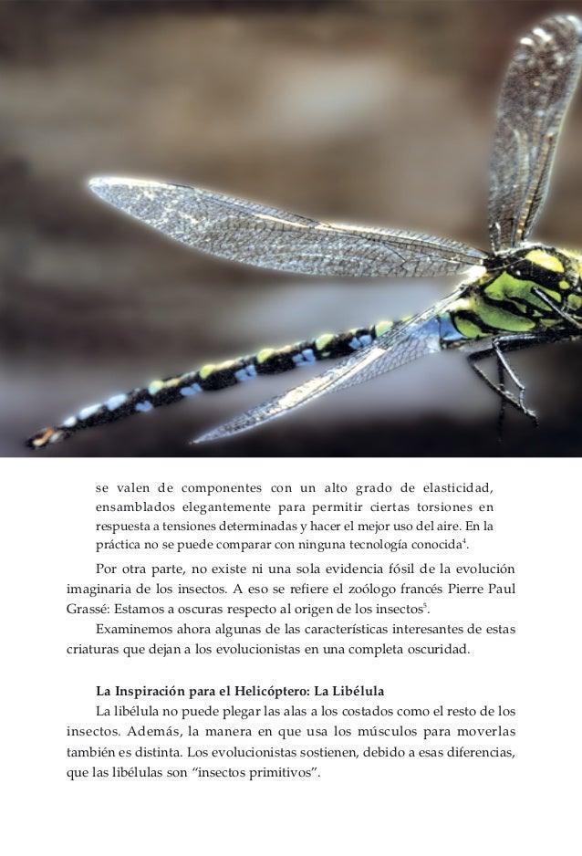 Encantador Anatomía De La Libélula Modelo - Anatomía de Las ...