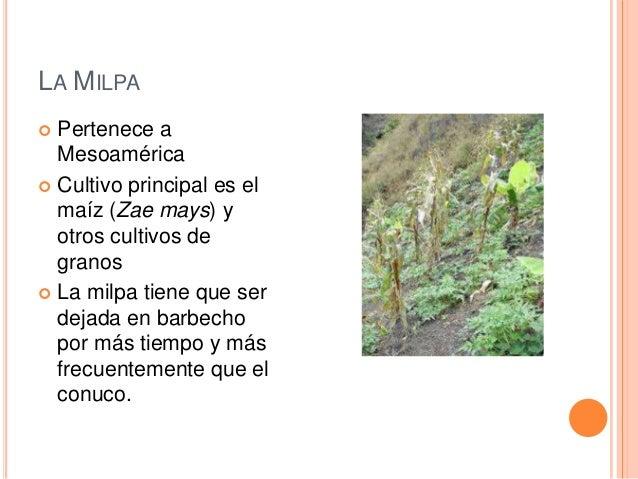 Los Sistemas Agrícolas Precolombinas