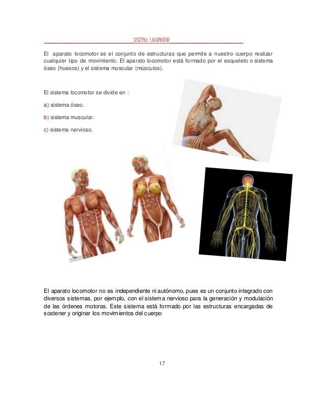 Único Estructura ósea Del Cuerpo Humano Regalo - Imágenes de ...