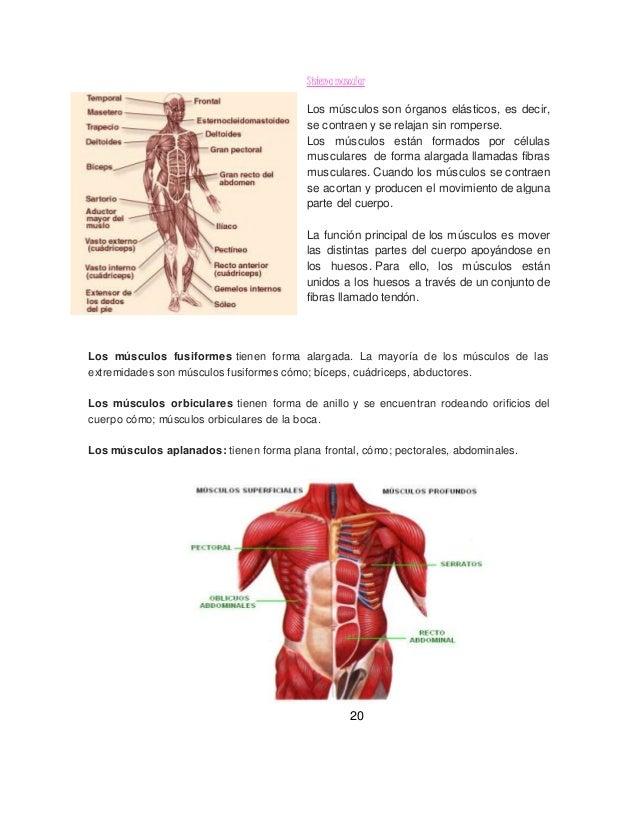 Los sistemas del cuerpo humano 12( incorporado el psicomotor(muscular…