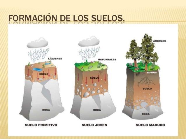Los suelos for Como estan formados los suelos