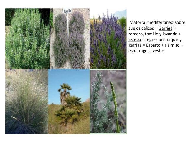 Los suelos y vegetaci n - Pisos en estepa ...