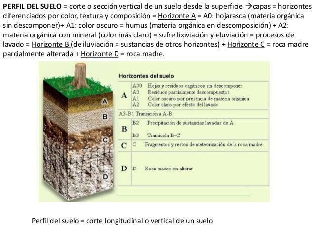 Los suelos y vegetaci n for Perfil del suelo wikipedia